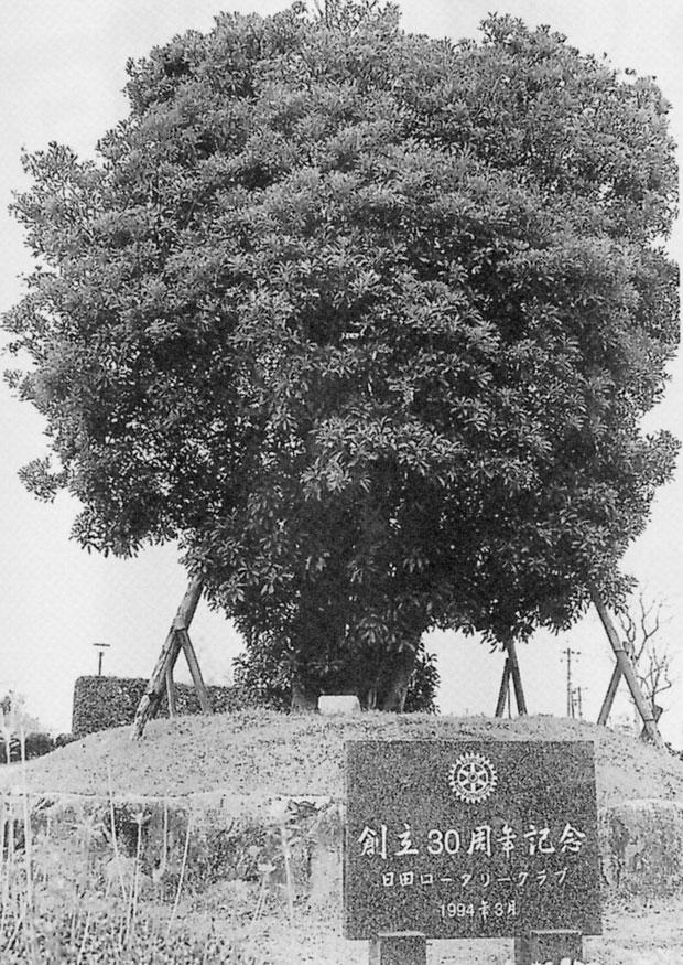 日田市総合体育館植樹