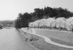 記念事業亀山公園櫻並木